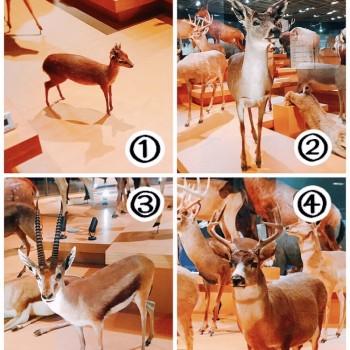 動物の標本と戯れた。in博物館