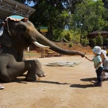 象さん、直乗り、30分。
