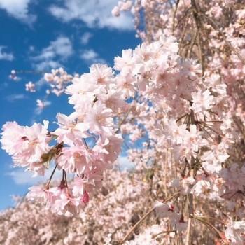 色々な花〜❁