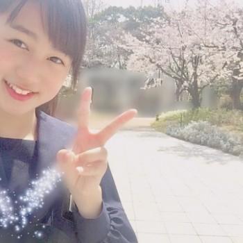 桜&お知らせ!