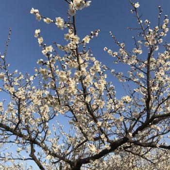 もうすぐ春ですね〜🌸🐝