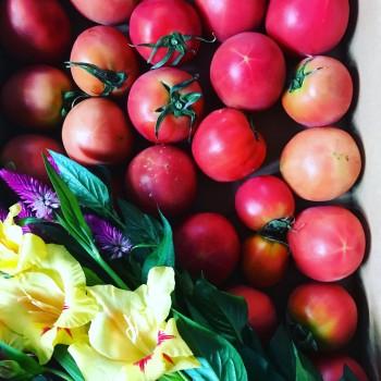 自然栽培の野菜&フルーツ✨