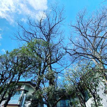 大きな木の存在✨