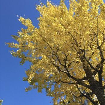 風博士と秋の空