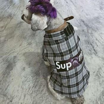 ペット服 オシャレ シュプリーム,シュプリーム お飼い主とのペアルック 犬服,ドッグ服 可愛い supreme,シュプリーム ネコ服 パロディ,ペット用品通販
