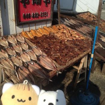 クマ散歩:三崎港で品行方正なクマは魚を買う