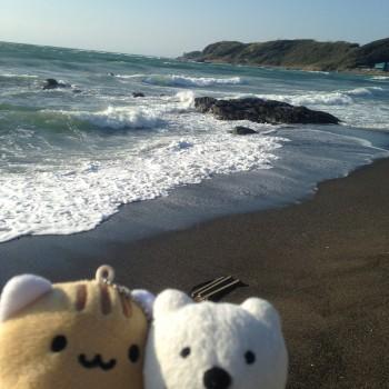 クマ散歩:荒崎・潮騒のみちに品行方正なクマ出没 (初声町 Hasse-machi)