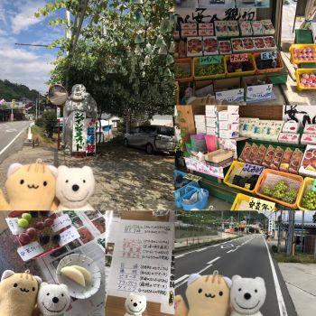 クマ散歩:御坂町上黒駒で品行方正なクマは果物を買う