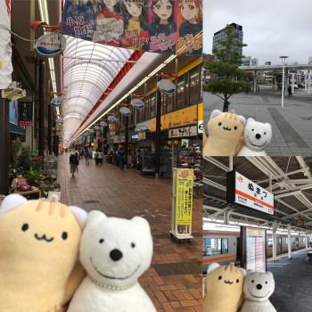 クマ散歩:沼津に品行方正なクマ出没
