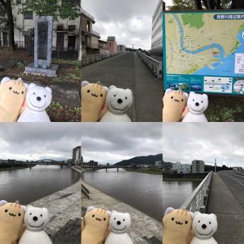 クマ散歩:狩野川を品行方正なクマが下る