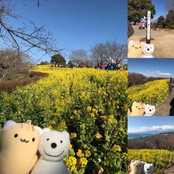 クマ散歩:吾妻山公園に品行方正なクマ出没2