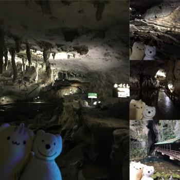 クマ散歩:秋芳洞に品行方正なクマ出没