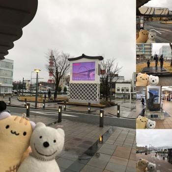 クマ散歩:福知山に品行方正なクマ出没