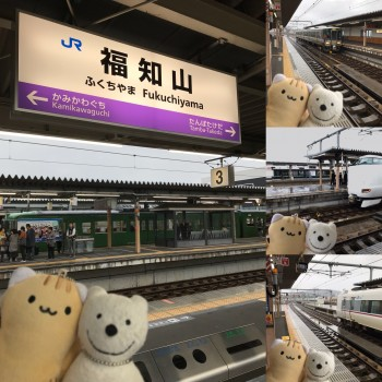 クマ散歩:福知山駅に品行方正なクマ出没