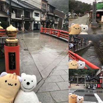 クマ散歩:城崎温泉に品行方正なクマ出没