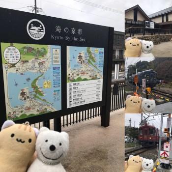 クマ散歩:天橋立に品行方正なクマ出没