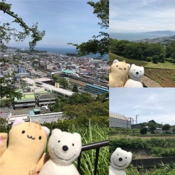 クマ散歩:吾妻山公園を発ち品行方正なクマは二宮町中里で新幹線に出会う