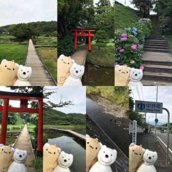クマ散歩:厳島神社・厳島湿生公園に品行方正なクマ出没