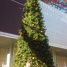 またまたクリスマスツリーだよ(^^)b