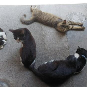 猫もグッタリ!