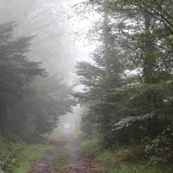 すごい霧・・・!