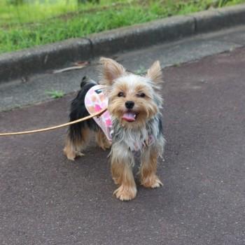 昨日のお散歩にて!