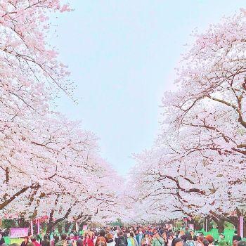 上野公園💗