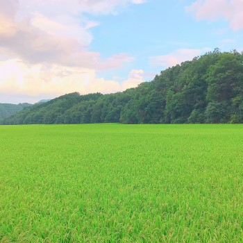 田舎 … ✽