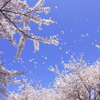 春風来る!暖かい風が吹くたまに突風ですが・・・