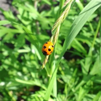 てんとう虫を発見しました。