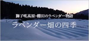 獅子吼高原・棚田のラベンダー畑物語〜ラベンダーの四季〜
