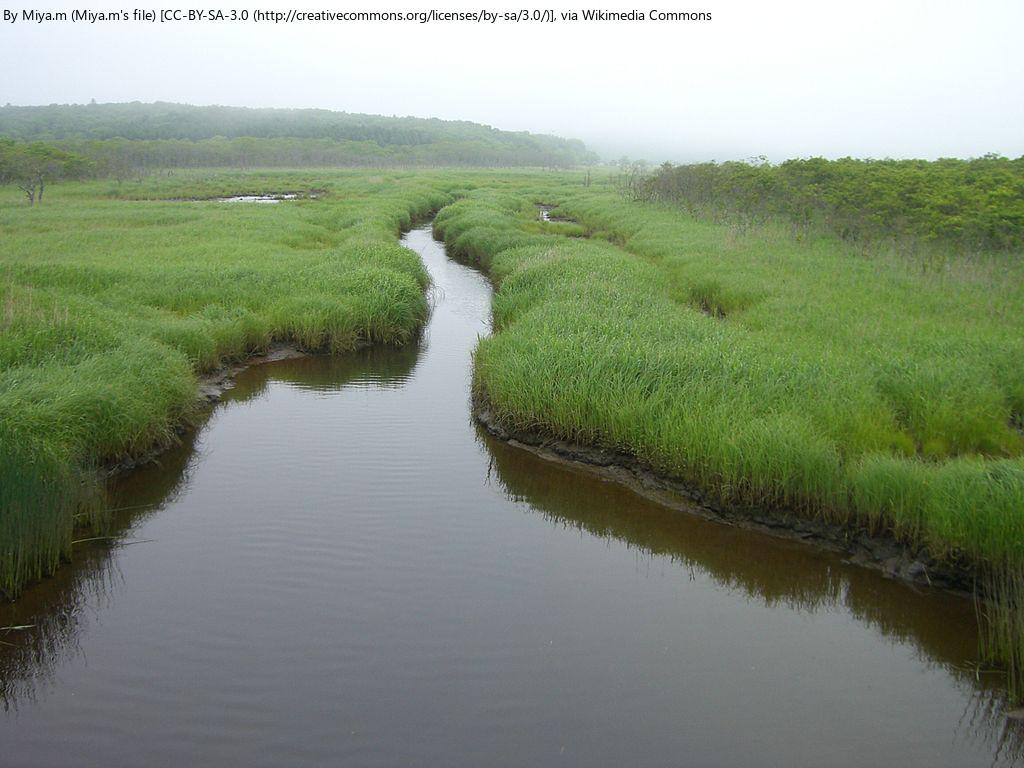 エリアケイパビリティー 海と湿原のつながりフォーラム 浜中町 (10/11) 札幌