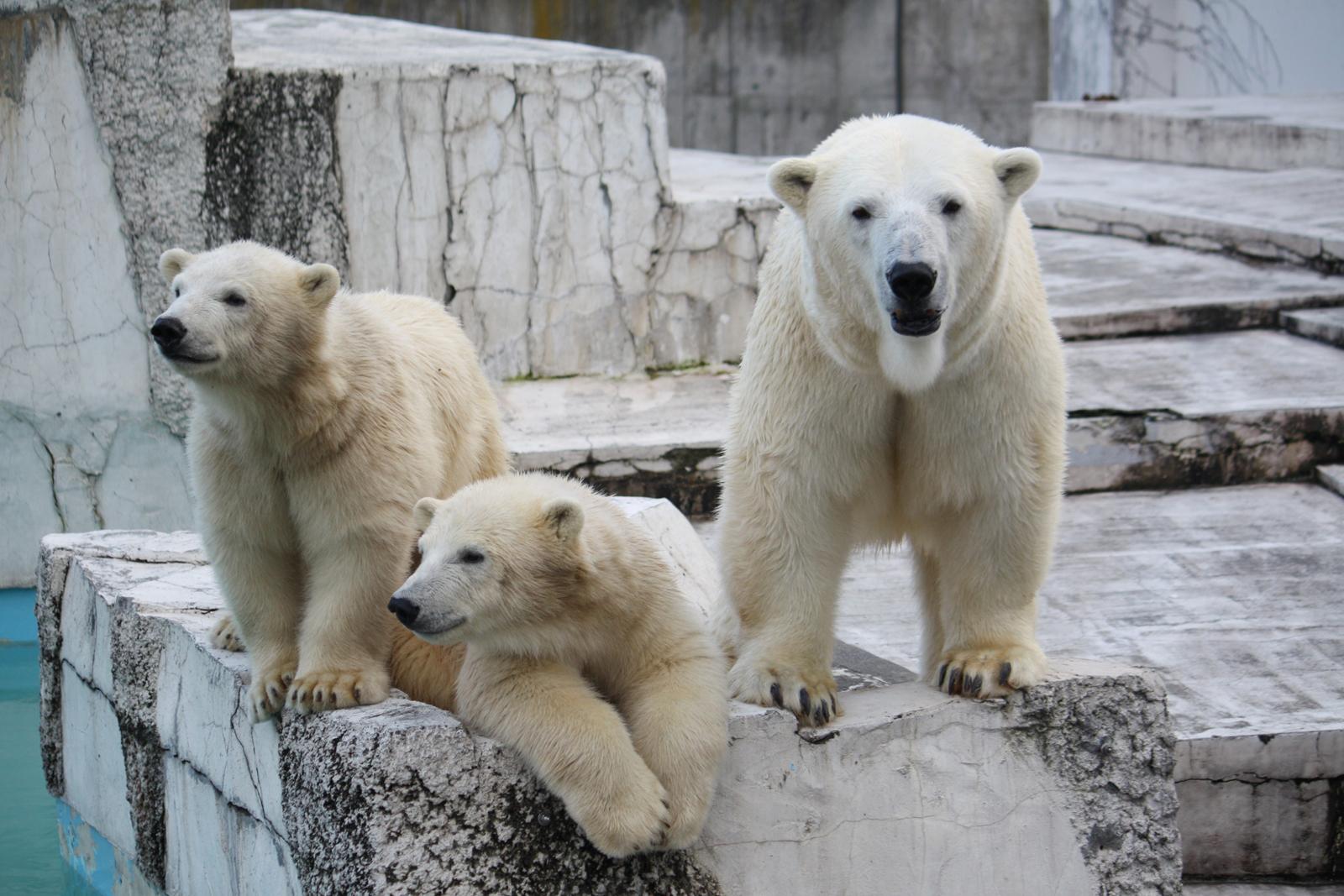 今年度で7年目 2016年森の散策タイム 円山動物園 (5/7〜10/30) 札幌