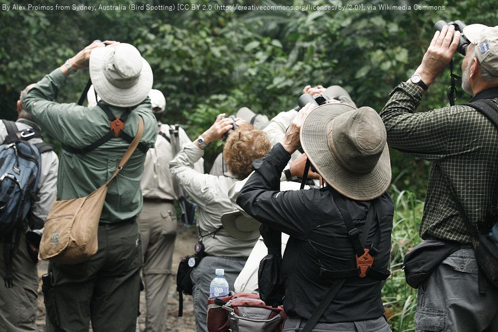 カラ類やキツツキ類などを観察する 野幌森林公園探鳥会 江別市 (9/4) 札幌