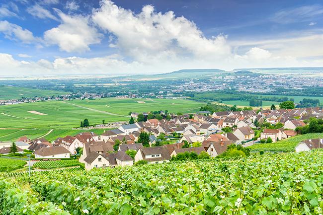 シャンパンに含まれる主要品種と生産地の特徴とは? | 家ワイン