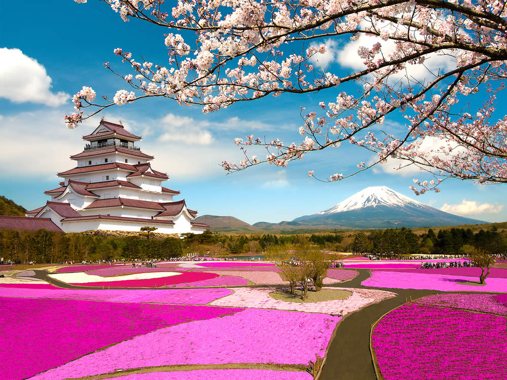 Japan The Land Of Cherry Blossoms Yabai The Modern Vibrant Face Of Japan