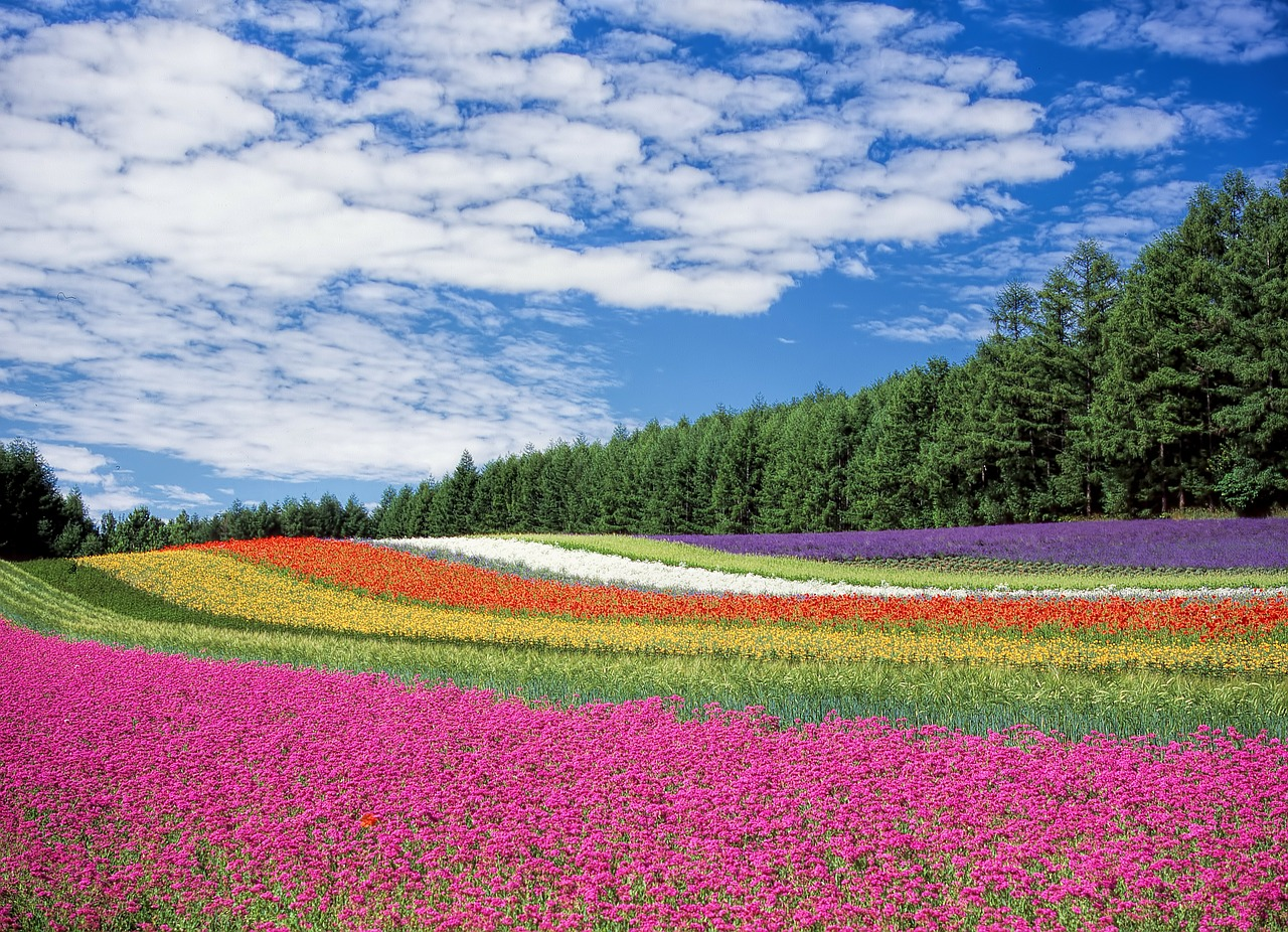 Japans april flowers cherry blossoms tulips and pink moss april flowers of japan mightylinksfo