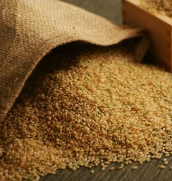 北釧水産 北海道美唄産おぼろづき玄米