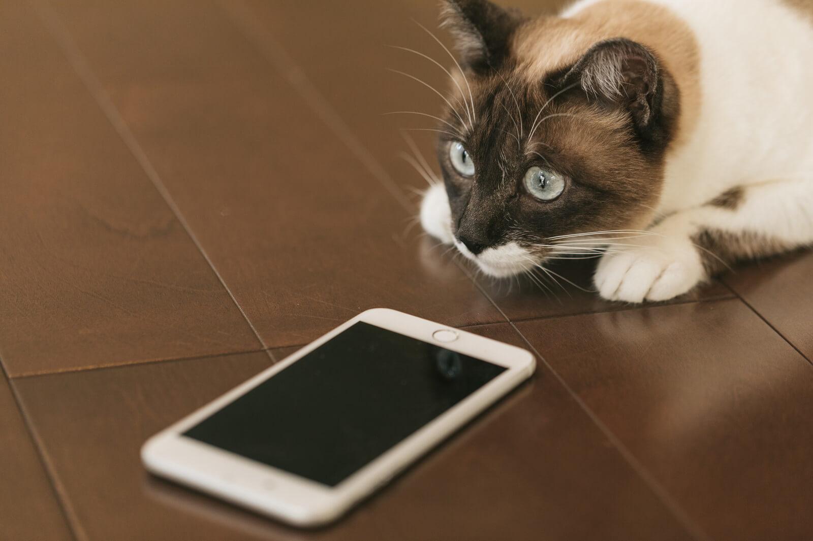 格安スマホデータ通信量の管理アプリを入れたスマホと猫