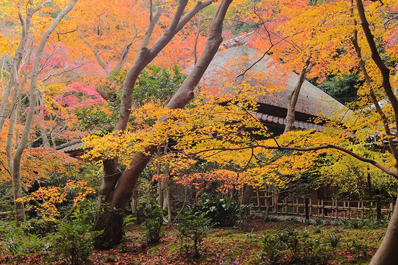 嵐山 祇王寺