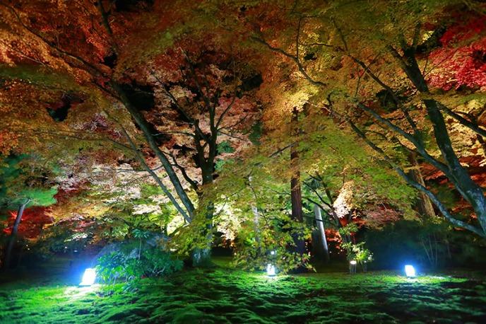 【京都嵐山で紅葉観光】京都在住カメラマンおすすめの10選!