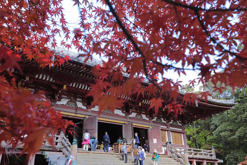 紅葉の名所、京都「高雄」観光【京都在住カメラマン 愛謝】