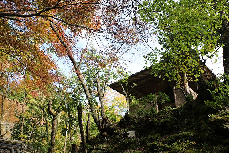 世界遺産 高雄 高山寺