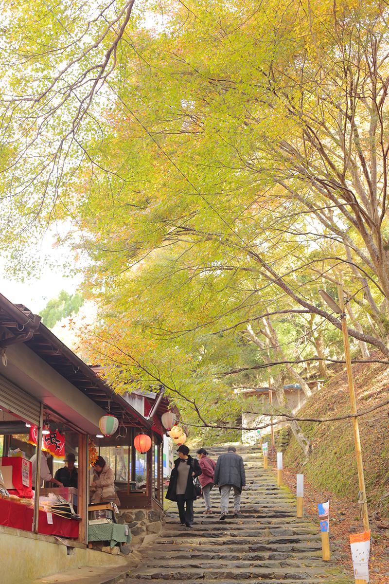 京都 高雄