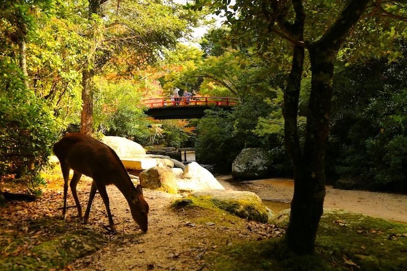 厳島神社15s