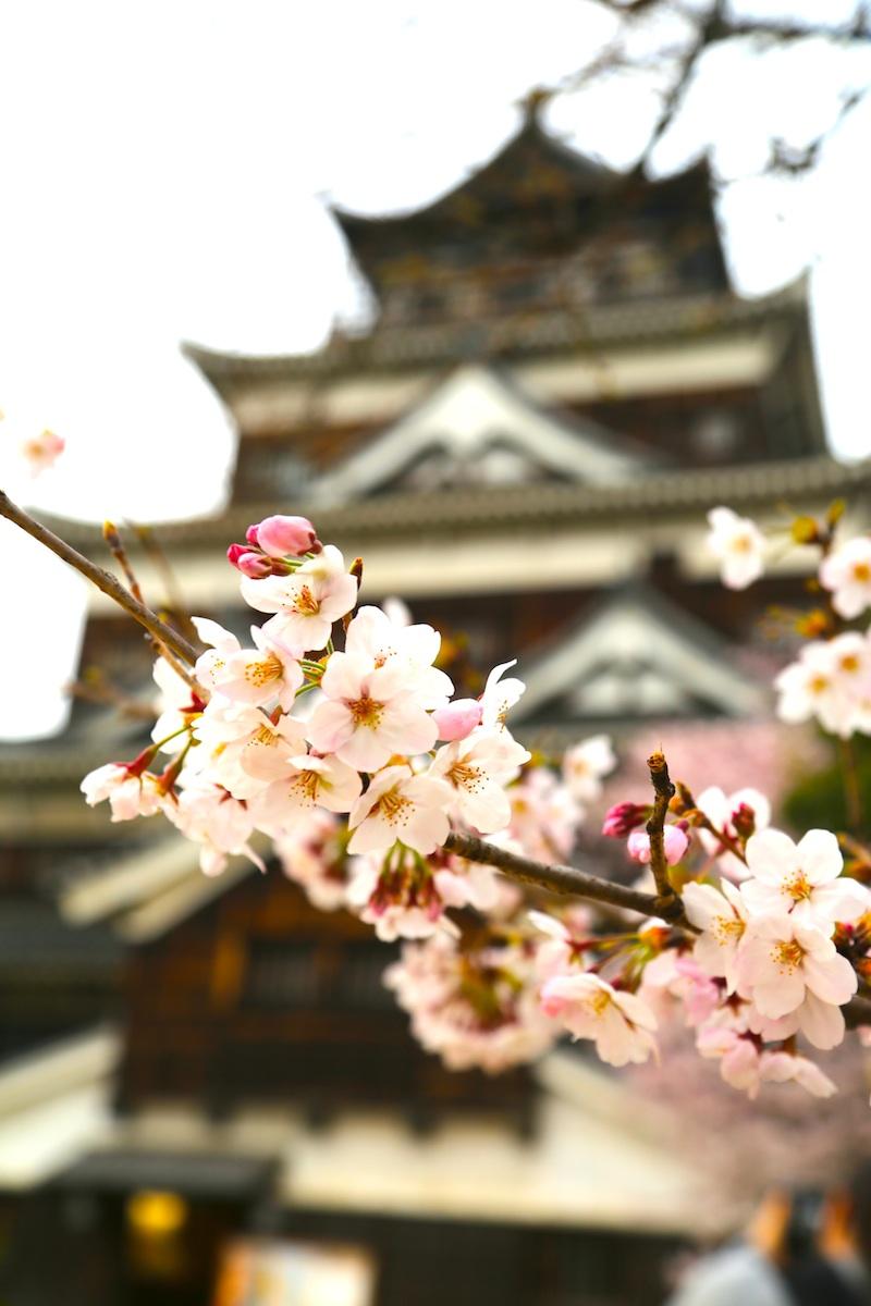 お城と桜s