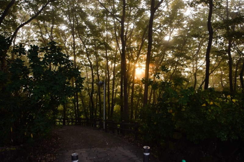 木の間から除く太陽