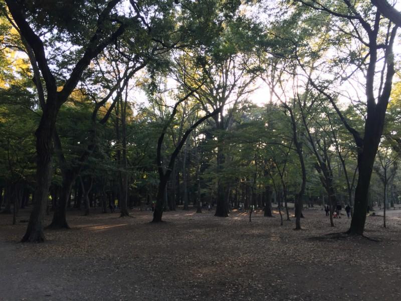 ichirukichijyojiphoto15