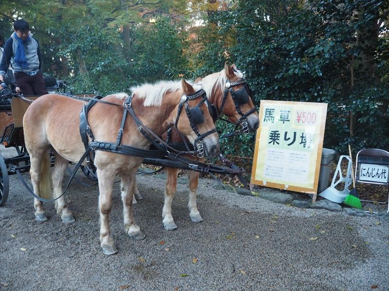 この参道は馬車に乗ることも可能なのだそう。いきなりの馬!