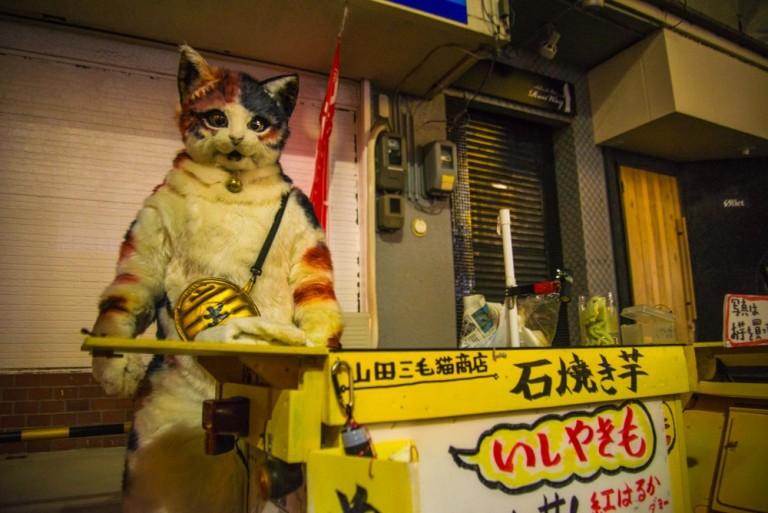 """【怪情報】""""猫""""が切り盛りする謎の焼きいも屋が鳥取にある……? 2時間くらい話を聞いてみた"""